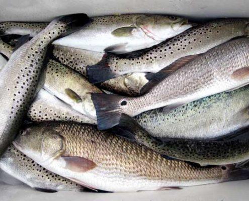 #TroutAndRedfishCharters