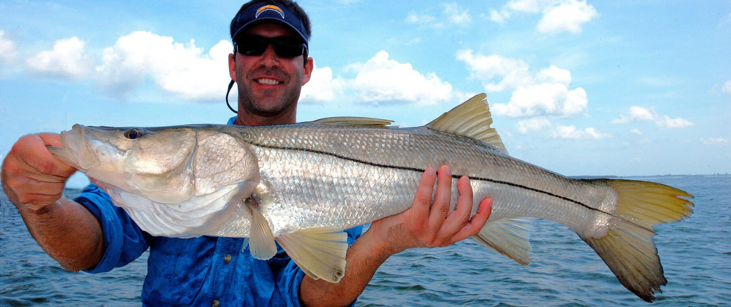 Snook - St. Petersburg & Tampa Bay Fishing Charters with Captain Wade Osborne