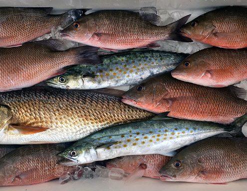 #RedfishSpanishMackerelMangroveSnapperCharters