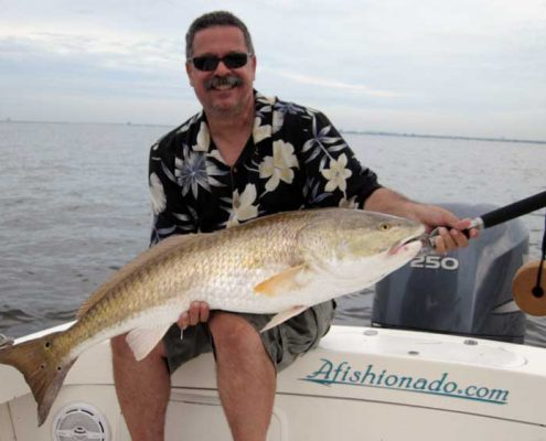 "42"" Redfish Caught in Tampa Bay aboard the Afishionado"